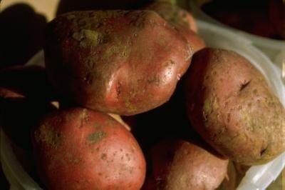 Crock Pot Broasted New Red Potatoes